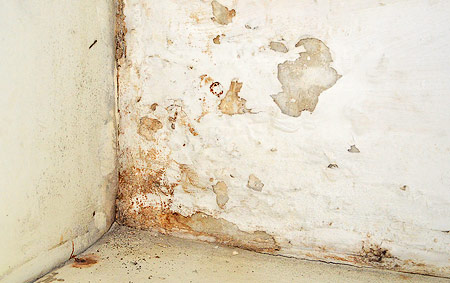 Make the right choice and Cure Your Rising Damp Problem for Good